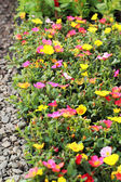 Variety of colorful flowers in the garden — Stock Photo