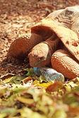 Kruipende schildpad in de natuur — Stockfoto