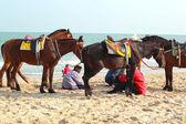 Horses on the beautiful beach — Стоковое фото