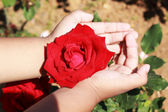 Hand with red roses in the garden. — Photo