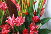 Galangal red flowers in the nature — Stock Photo