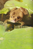 Frog in a pond with nature. — Stock Photo