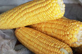 Fresh sweet corn in the market — Stock Photo