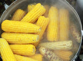 Sweet corn boiled in the pot — Stock Photo