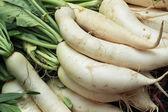 Fresh radish in the market — Stock Photo