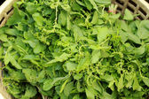 Basilico fresco verde nel mercato — Foto Stock