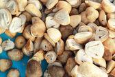 Fresh mushrooms in the market — Stock Photo