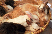 A lot rabbits for sale — Stock Photo