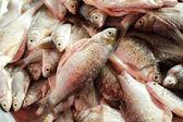 čerstvé ryby na trhu. — Stock fotografie