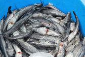 Färsk fisk på marknaden. — Stockfoto