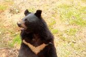 Bears herd in the nature — Stock Photo
