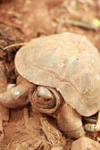 Crawling tortoise in the nature — Stock Photo