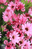 Vackra chrysanthemum konstgjorda blommor — Stockfoto