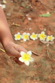 White frangipani flower on the hand — Stock Photo
