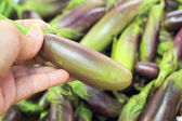 Eggplant purple in the market — Stock Photo