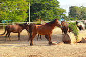 Horse masses in the farm — Stock Photo