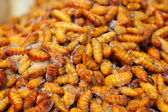 Fried silk worms in the market — Stock Photo