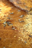 Fresh honey in the comb - background  — Stockfoto