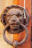 Door handle sculpted lion head on an ancient wooden door. — Stock Photo