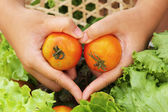 Vegetables salad and tomato - patterns heart in hand — Stock Photo
