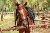 макро лошадь в ферме — Стоковое фото