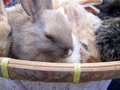 Rabbit small lot sold at the market. — Stock Photo