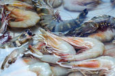 Fresh shrimp in the market — Stockfoto