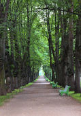 Track in the Pavlovsk Park — 图库照片