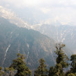 Stock Photo: Fir in Himalayas