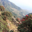 Stock Photo: Landscape with Blossoming Rhododendron in Himalayas