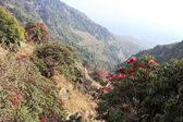 Landscape with Blossoming Rhododendron in Himalayas — Stockfoto