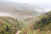 Dragon Ridge Terrace of rice fields at fog weather — Stockfoto