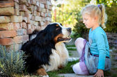 Girl and the dog — Stock Photo