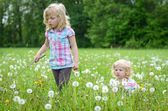 Girls on a dandelion meadow — Stock Photo