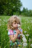 Little girl blowing a dandelion — Stock Photo