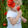 Stock Photo: Child in corn poppy field