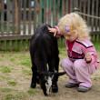 Foto Stock: Child and goat