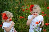 Children in a corn poppy field — Stock Photo