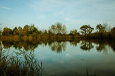 Tree reflection — Stock Photo