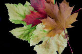 カラフルな紅葉 — ストック写真