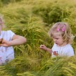 Girls in a rye field — Stock Photo