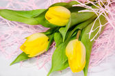 Yellow tulip — Foto de Stock