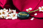 Spring flower and lava stone — Stock Photo