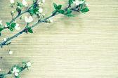 Retro spring flower  — Stock Photo
