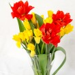 Yellow daffodil and red tulip — Stock Photo #44084061