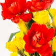 Yellow daffodil and red tulip — Stock Photo