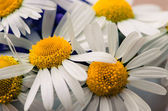 Colorful flowers — ストック写真