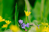 Purple yellow flowers — Stock Photo