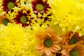 Yellow orange flowers — Stock Photo