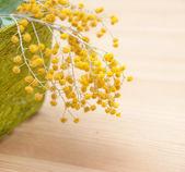Крупным планом мимозы в зеленом поле соломы — Стоковое фото